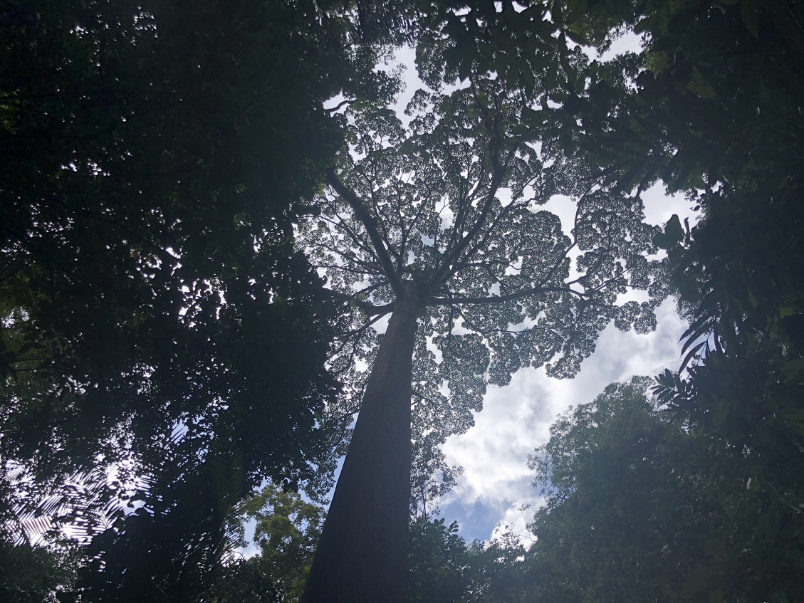 The rainforest canopy is awe-inspiring