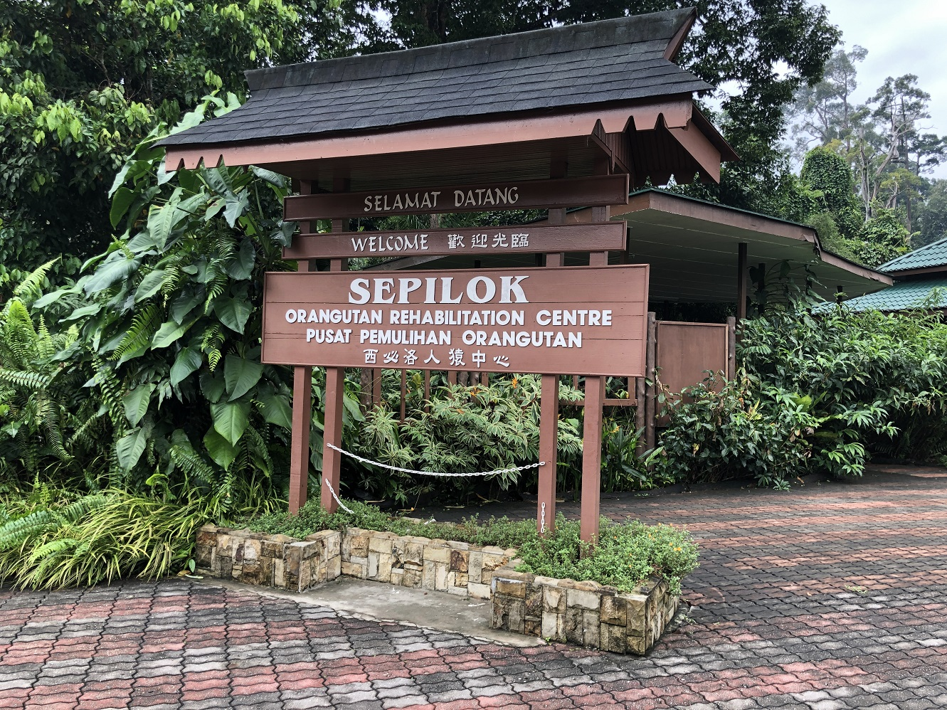 Visit the world-famous Sepilok Orangutan Rehabilitation Centre