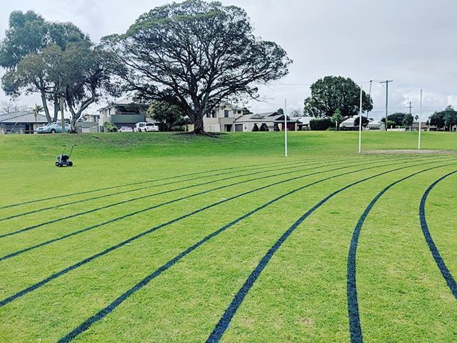 🎶 I see lines of blue Red roses too 🎶  #linemarking #athletics #sports #schoolcarnival #satisfying #uberline #grass #carnival #