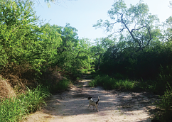 Walking Trails.png