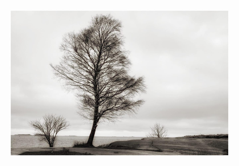treesea