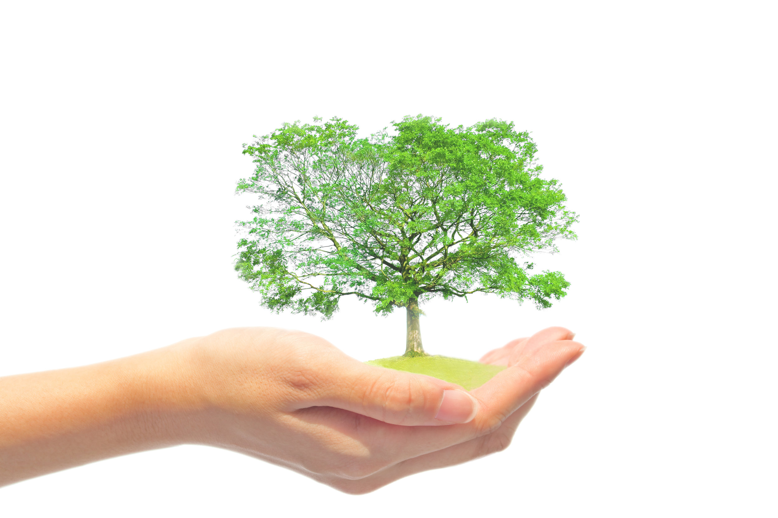Treeknowledge.jpeg