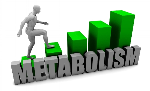 Metabolism.jpeg