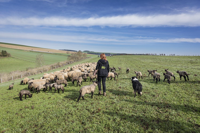 Schafswanderung