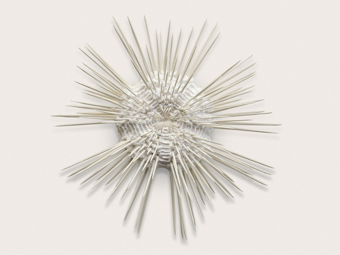 'Urchin III'  Sculpted and handmade paper - approx 38cm x 38cm