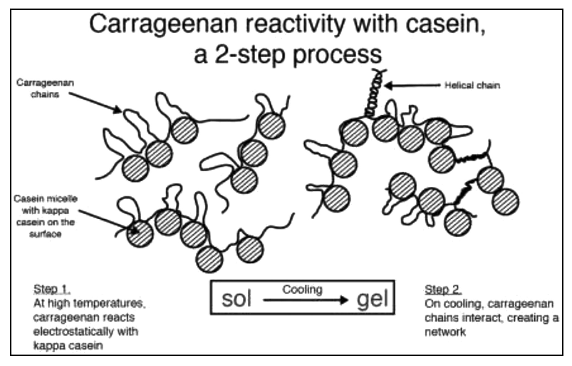Clarifying The Confusion Between Poligeenan Degraded Carrageenan