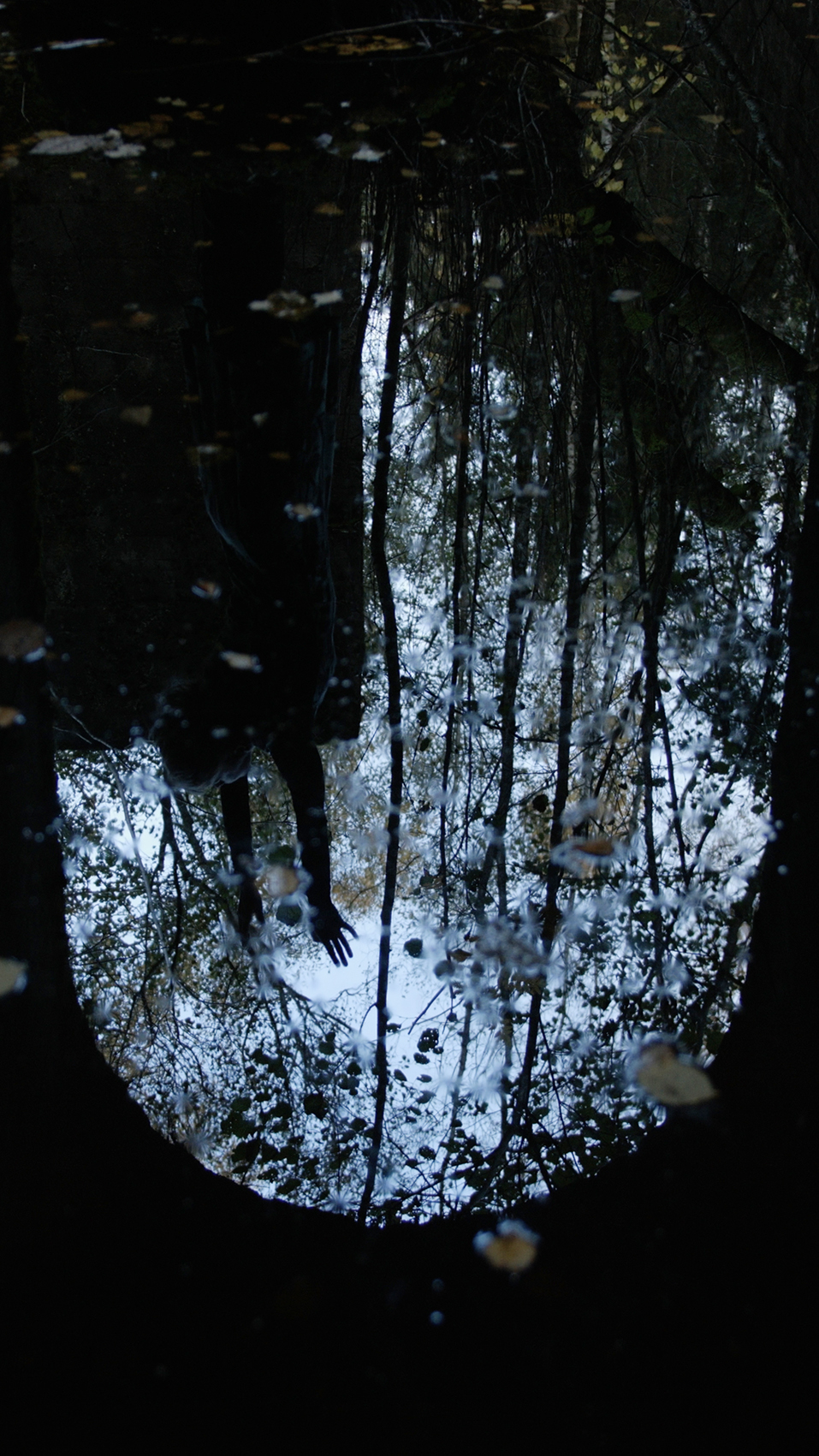 Portal 4 – Carolina Jonsson.jpg