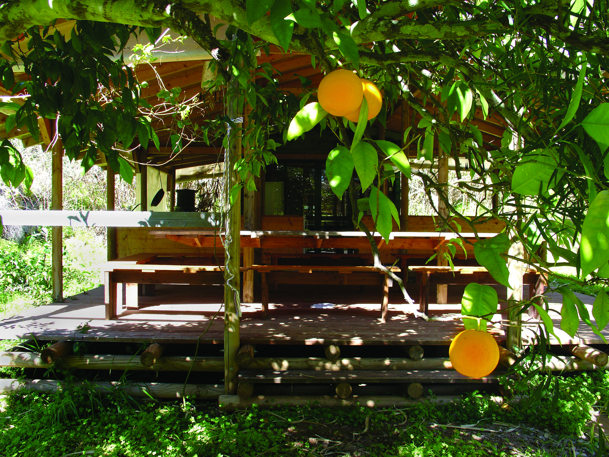 Oranges-export.jpg
