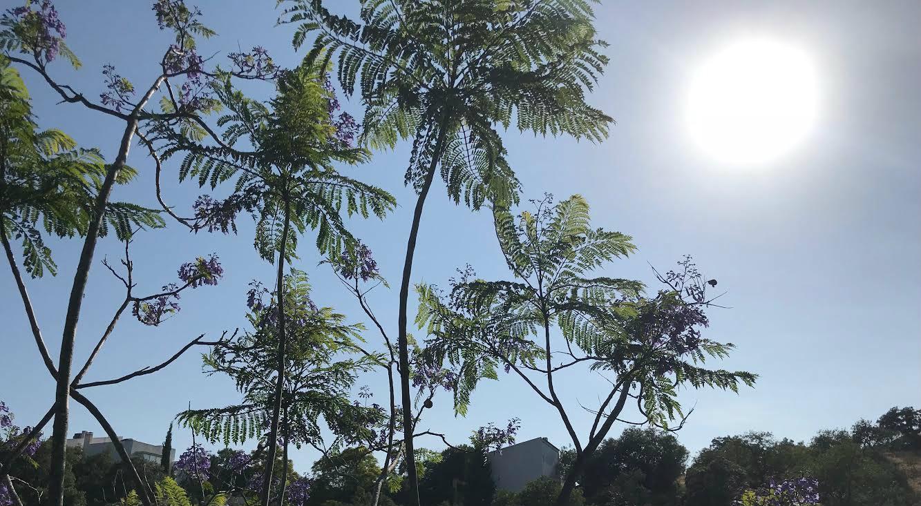 trees banner.jpg