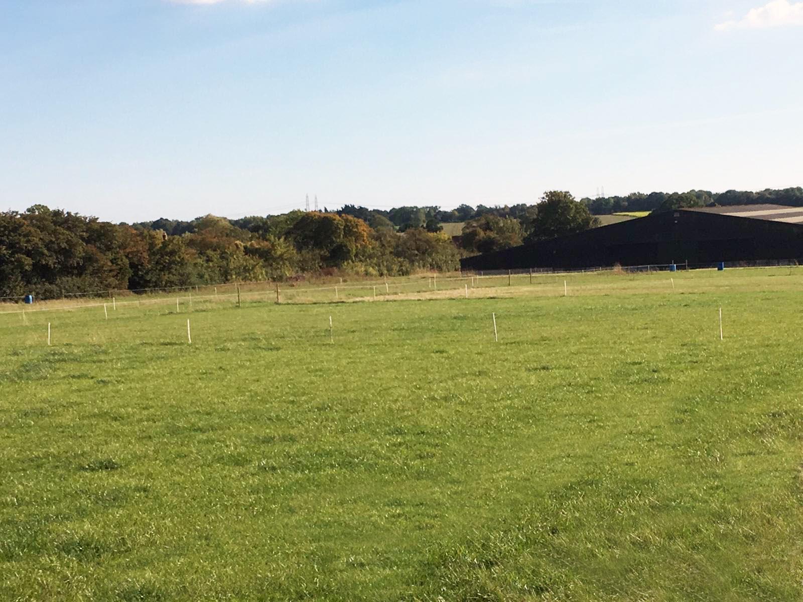 Fields - Livery.jpg
