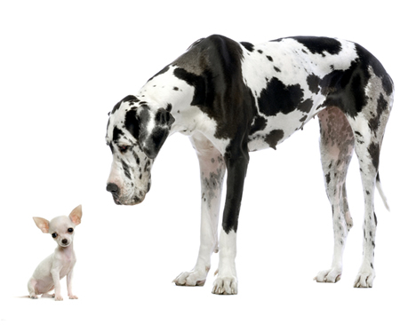 chihuahua-and-big-dog.jpg