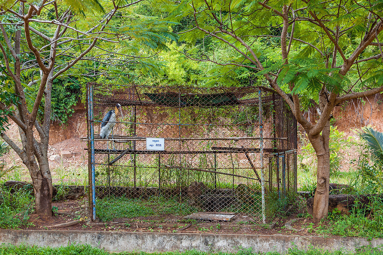 A big stork's cage