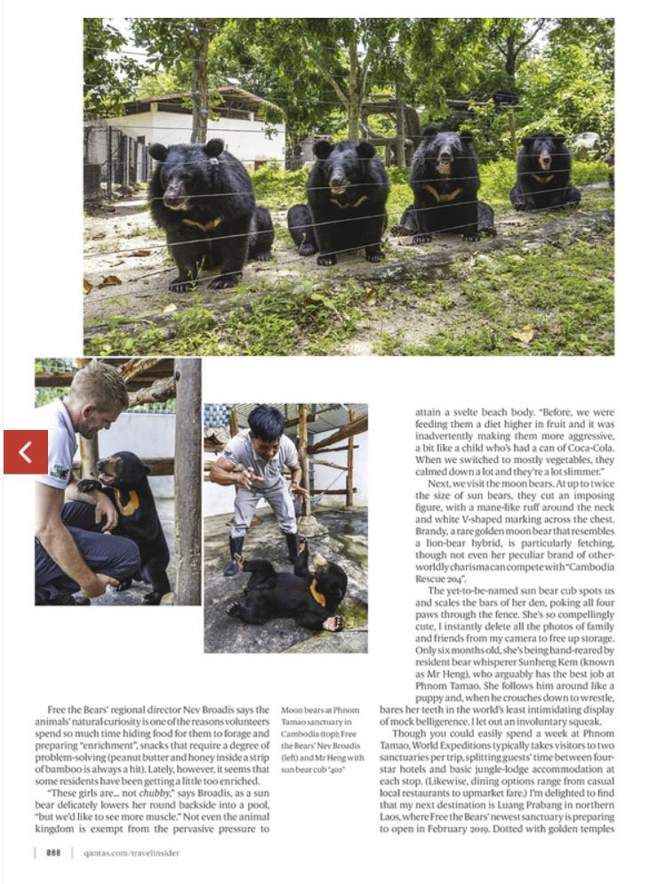Bears 3.png