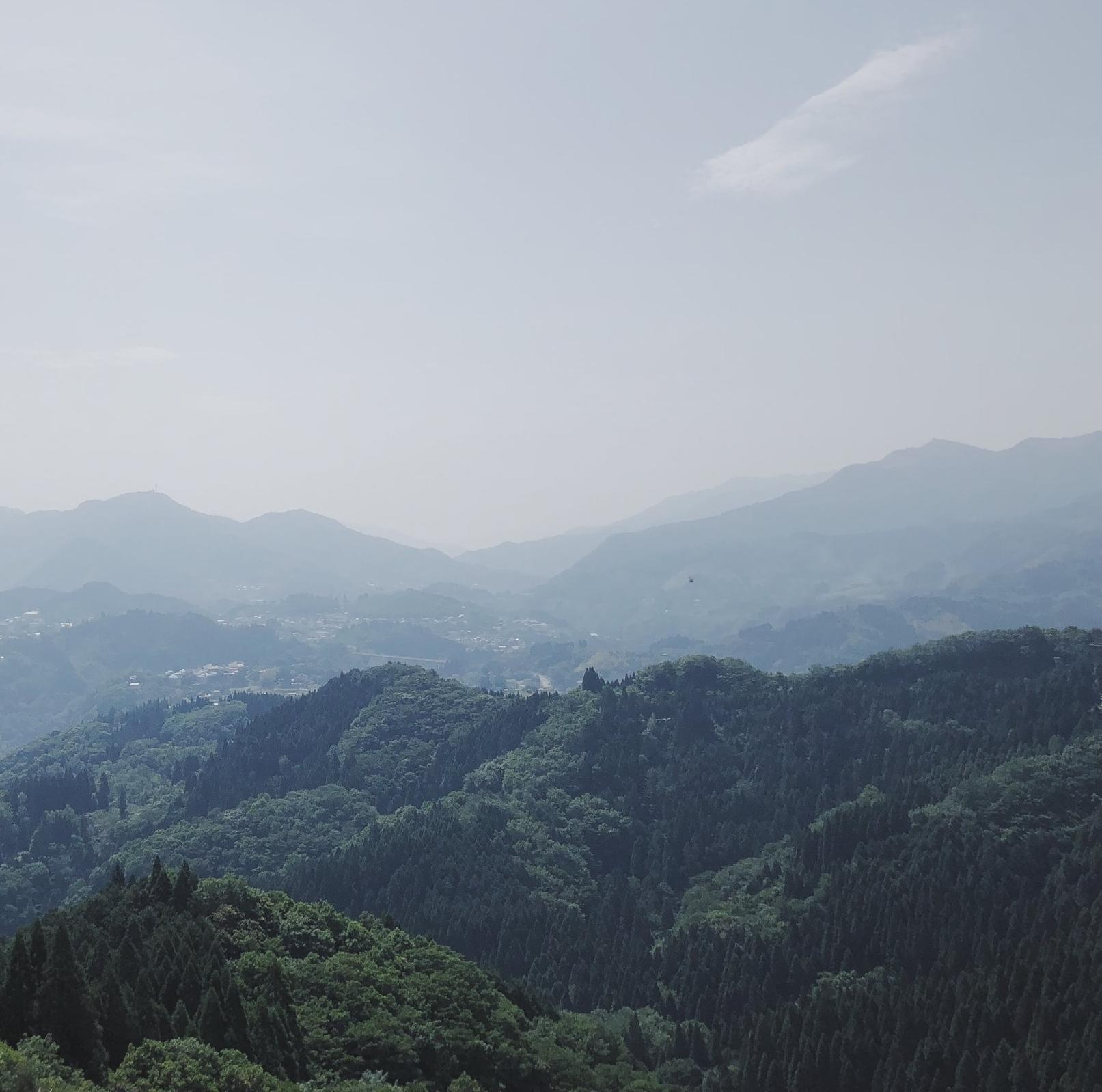 silentbloom_hills.jpg