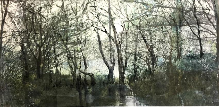 Lakeside Trees - Coniston