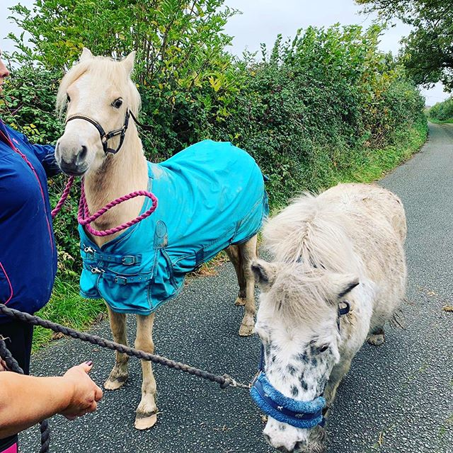 Three pretty ponies moved homes today! Lovely to see them again and thanks to Hollie for asking us to help!! 🐎🚖🌟
