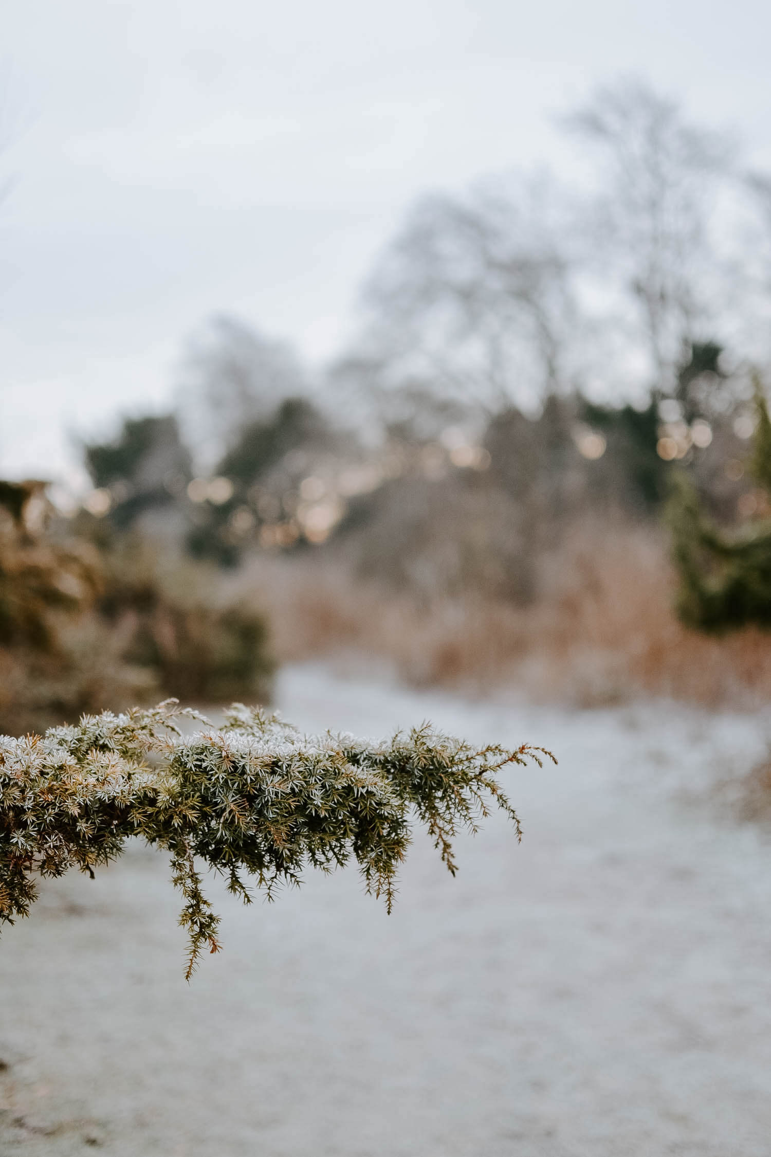 An early frosty morning in Hampshire | Josephine Brooks