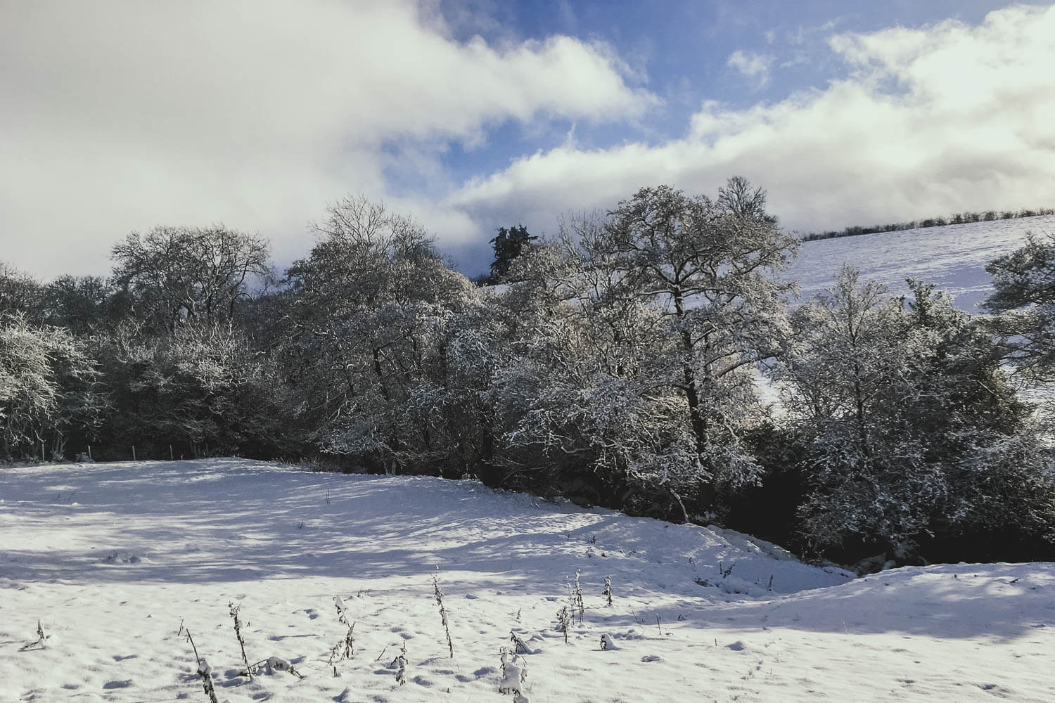 A white Christmas - countryside in a blanket of snow
