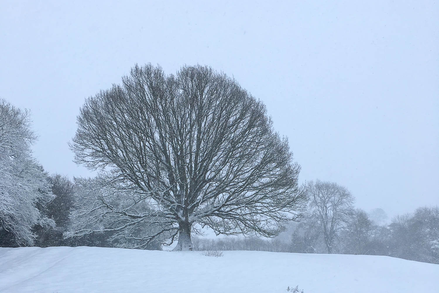 A lone tree in the middle of a field covered in snow