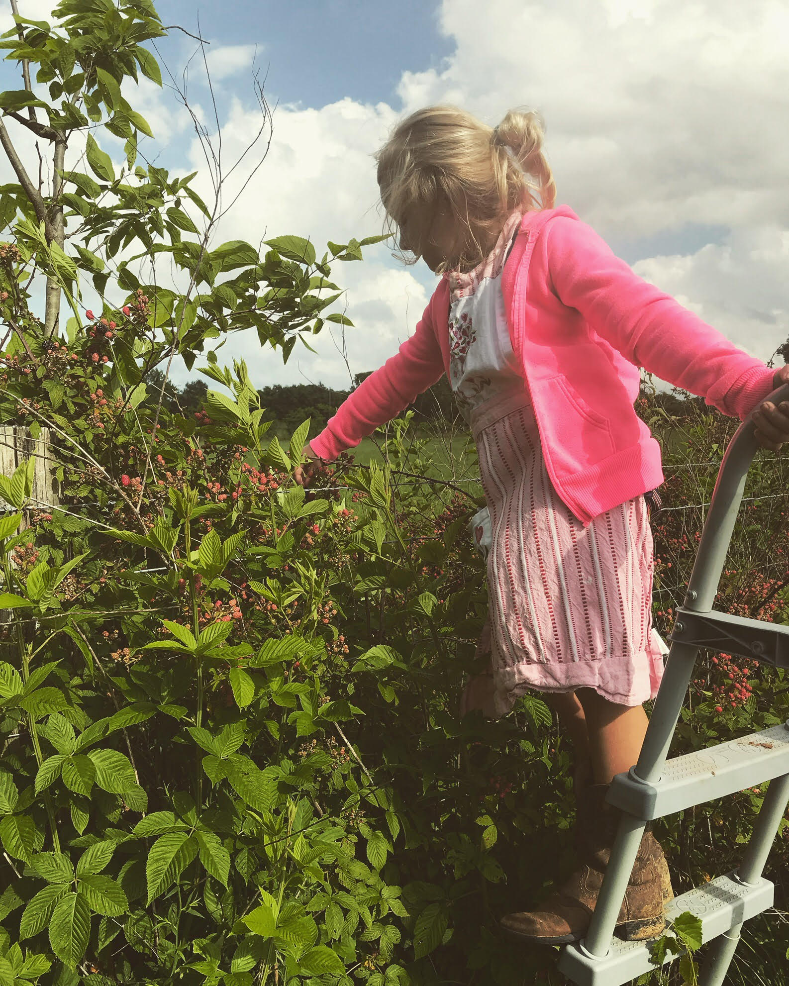My daughter picking blackberries from our farm. They peak from June to July.