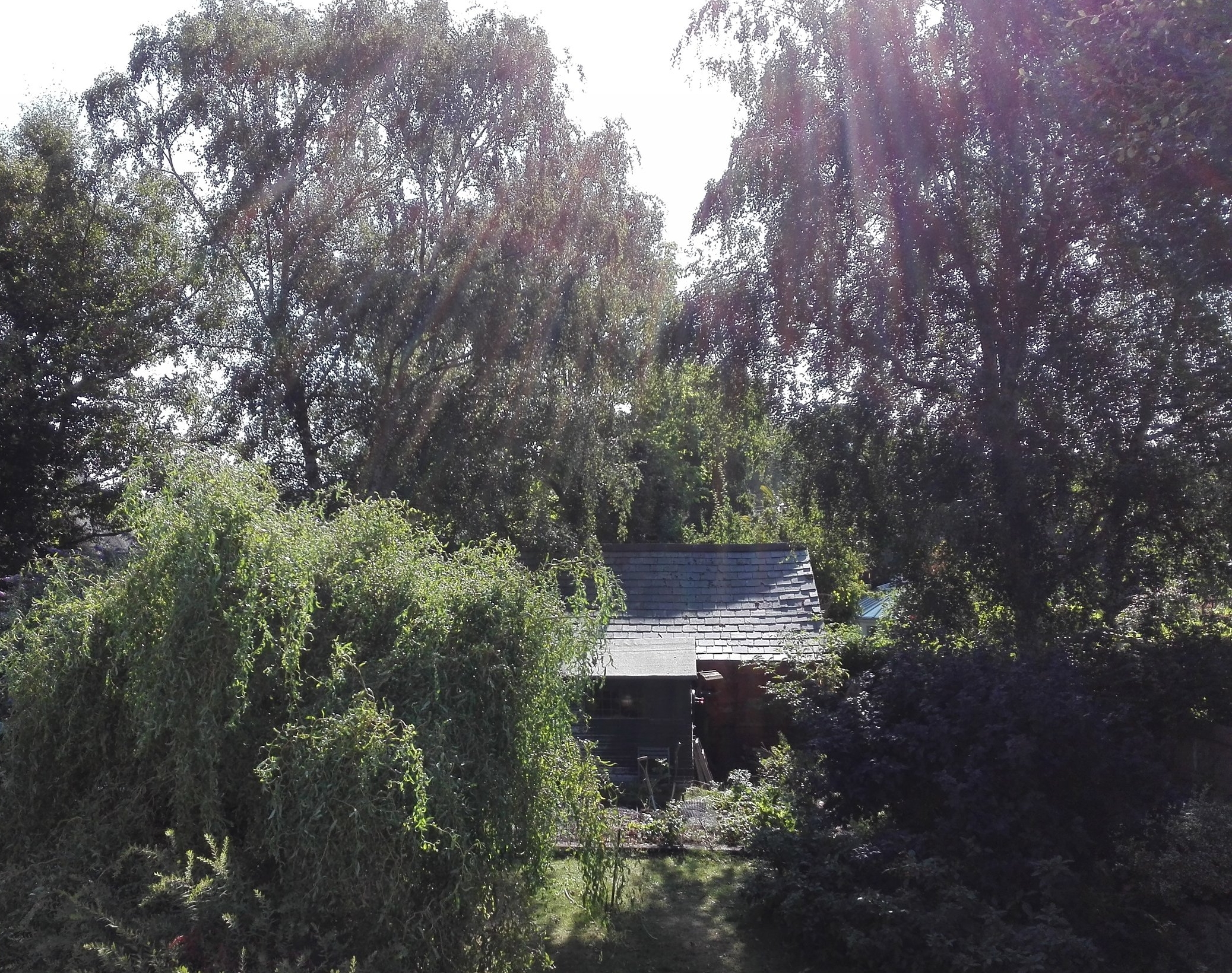 The MicroEden backyard on an August morning