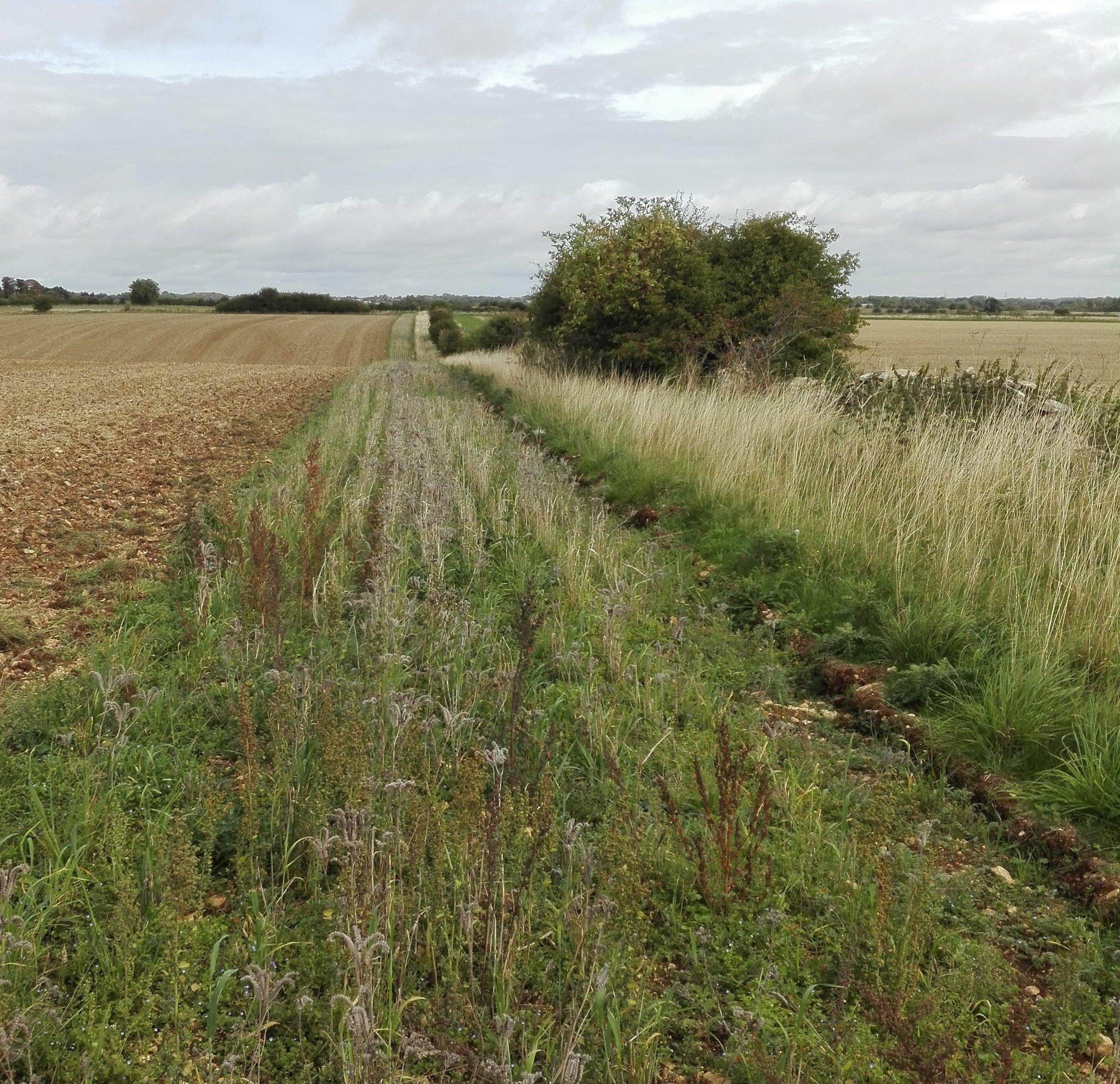 Calmsden Farm.jpg