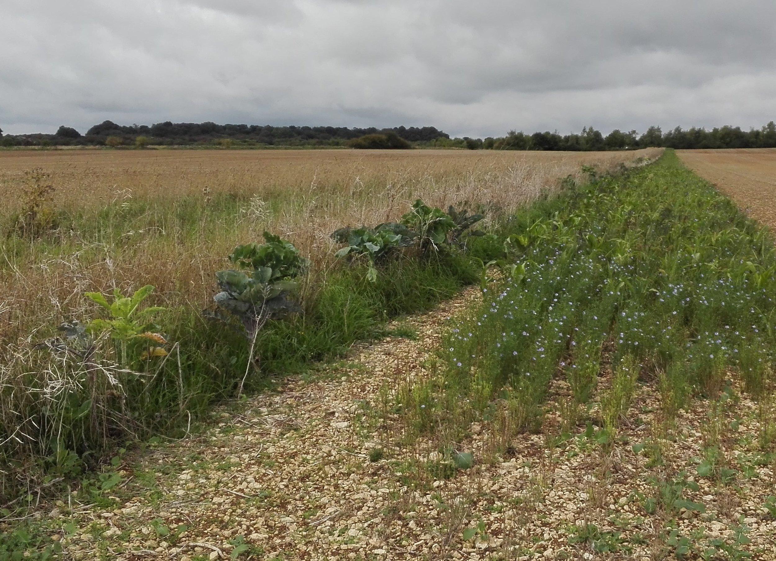 Calmsden Farm3.jpg