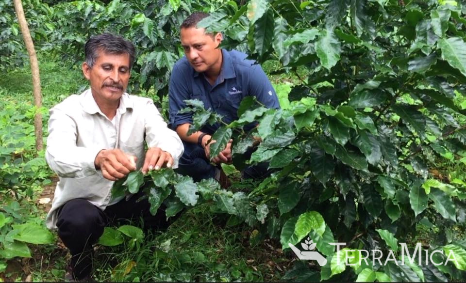 Ladislao and Patrick Aguirre with coffee tree