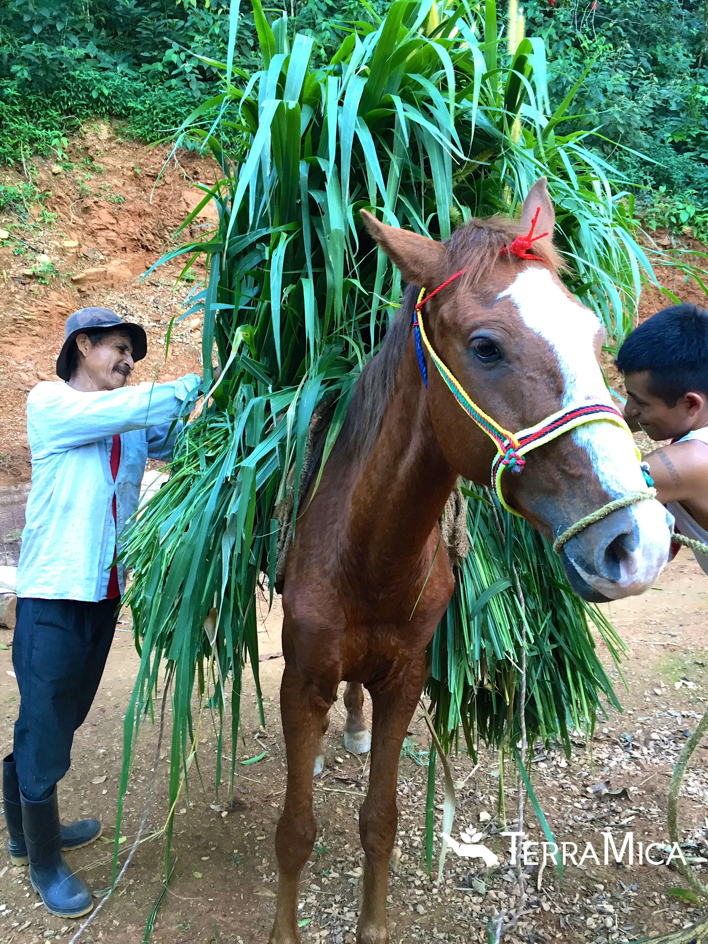 Lao and son packing their new brown horse