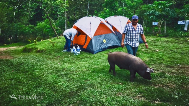 patuca-tents-with-pig-2017.jpg