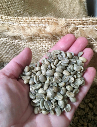coffee-seeds-in-hand.png