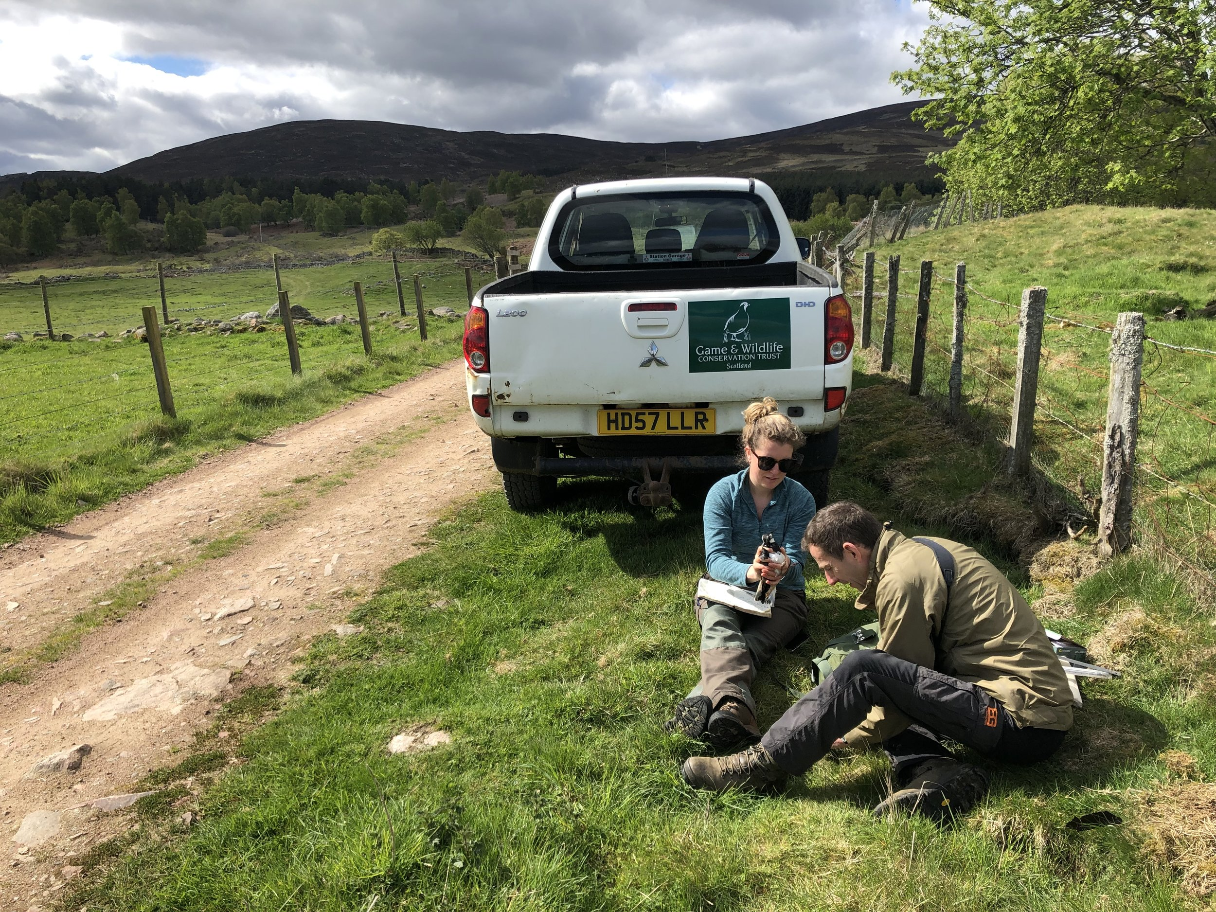 GWCT researchers tagging adult lapwings, May 2019