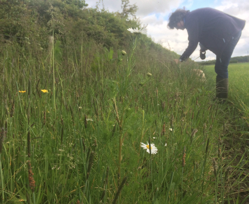 Inspecting arable field margins at Old Torr Farm near Auchencairn, Galloway.
