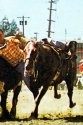 1994 Inductee Animal Spud.jpg
