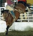 2010 Inductee Animal Wyatt Earp Skoal.jpg