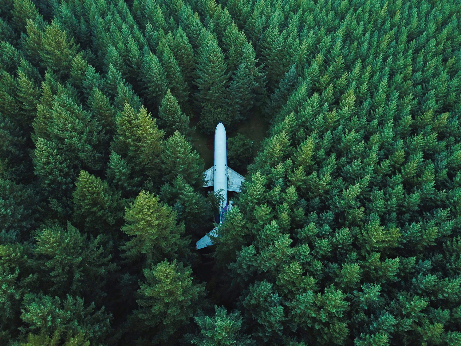 aerial-view-trees-drone-airplane-david-kovelenko-unsplash.png