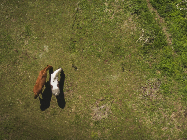 Riders in the sky. No matter the size of your ranch, drones can help you track livestock movement and headcount far and wide.