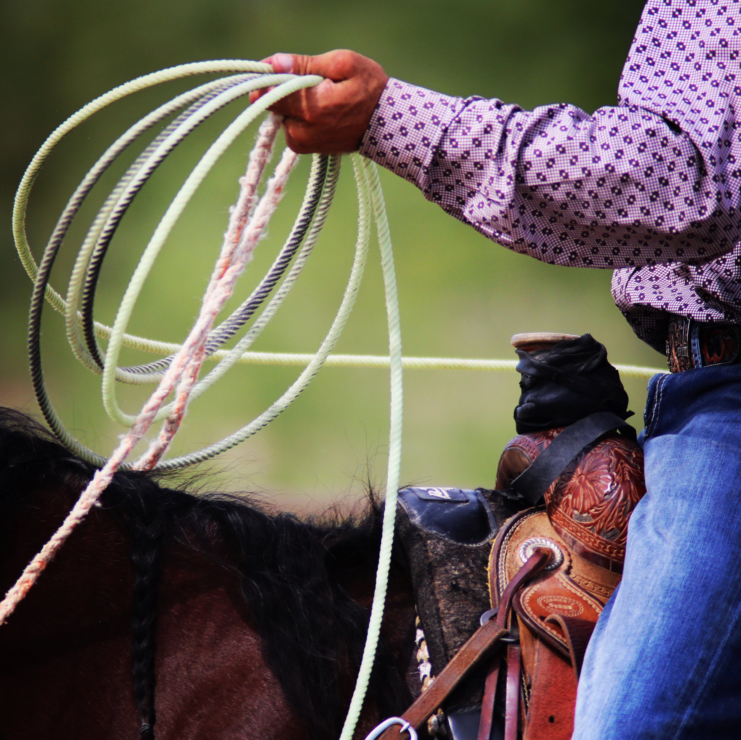 Benson Butterfield Rodeo -