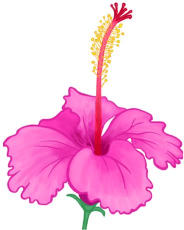 hisbiscus-joliecanoli.png