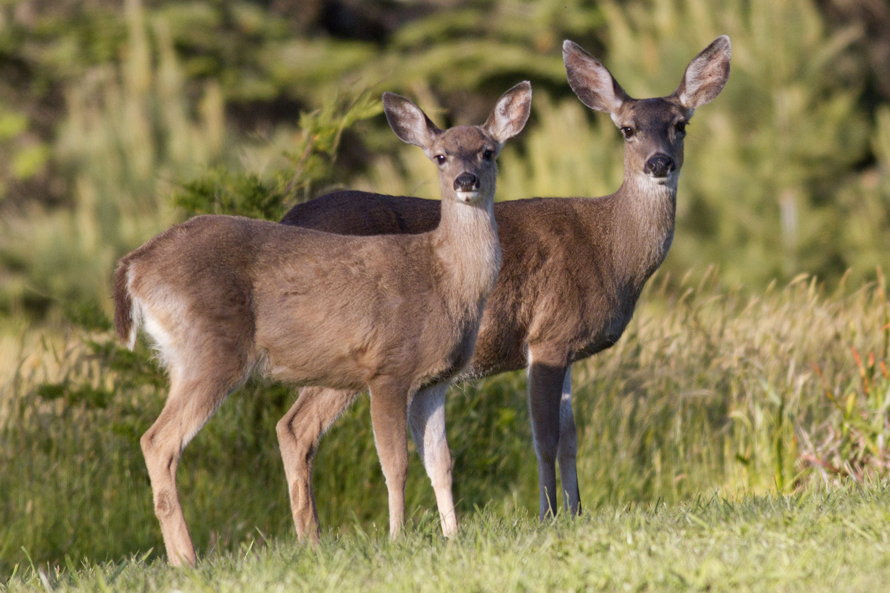 two deer in a meadow