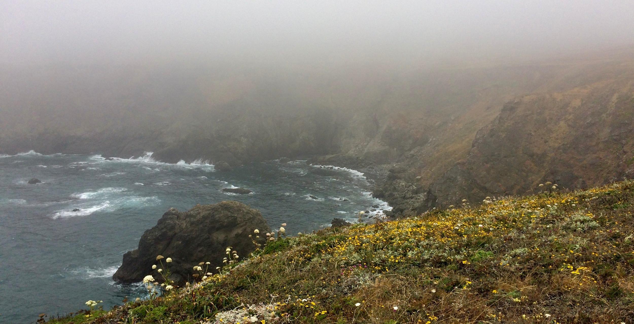 Navarro Point Preserve in the brooding fog.