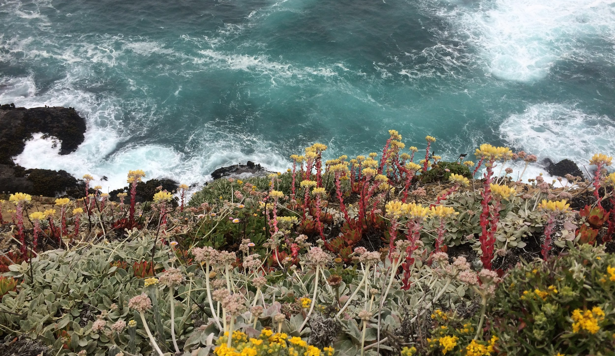 Wildflowers flowing down the cliffs at Navarro Point.