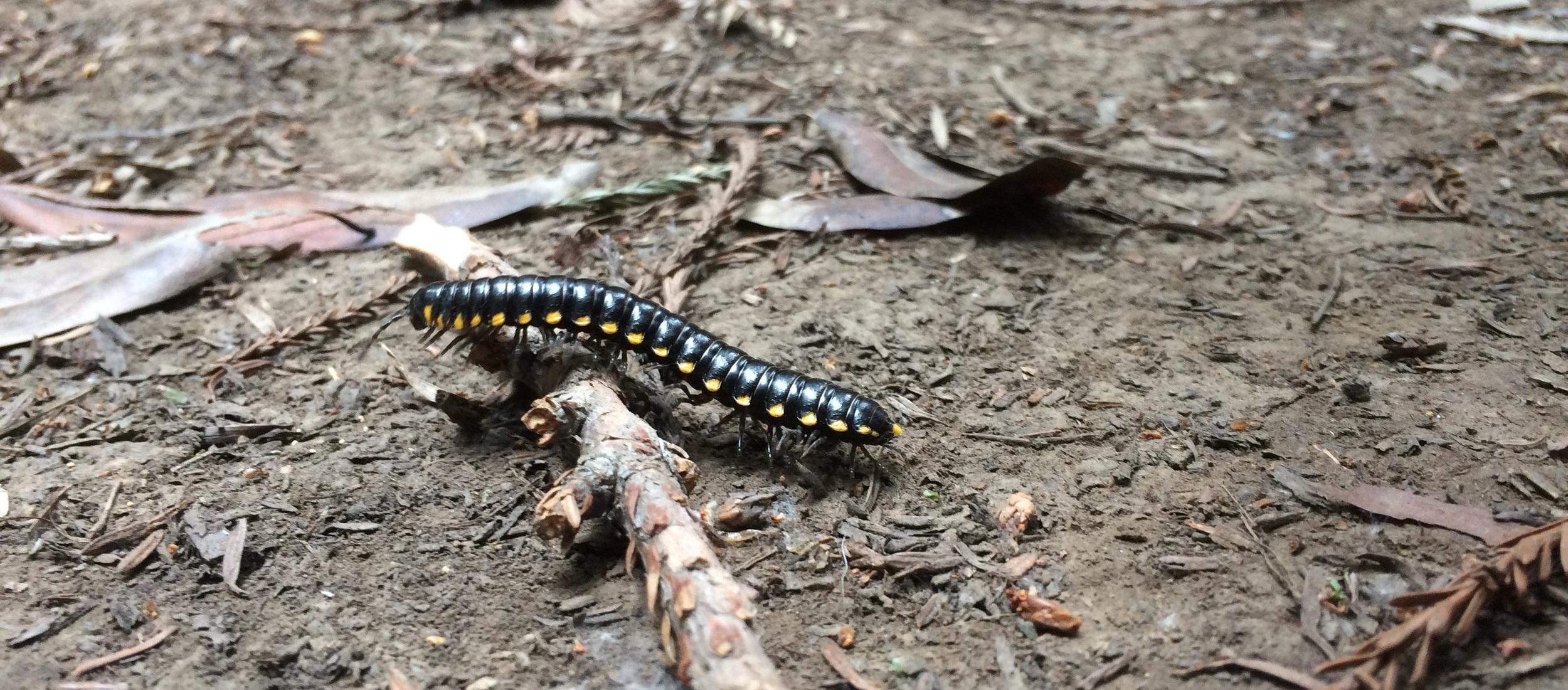 Bug walking through Hendy Woods.