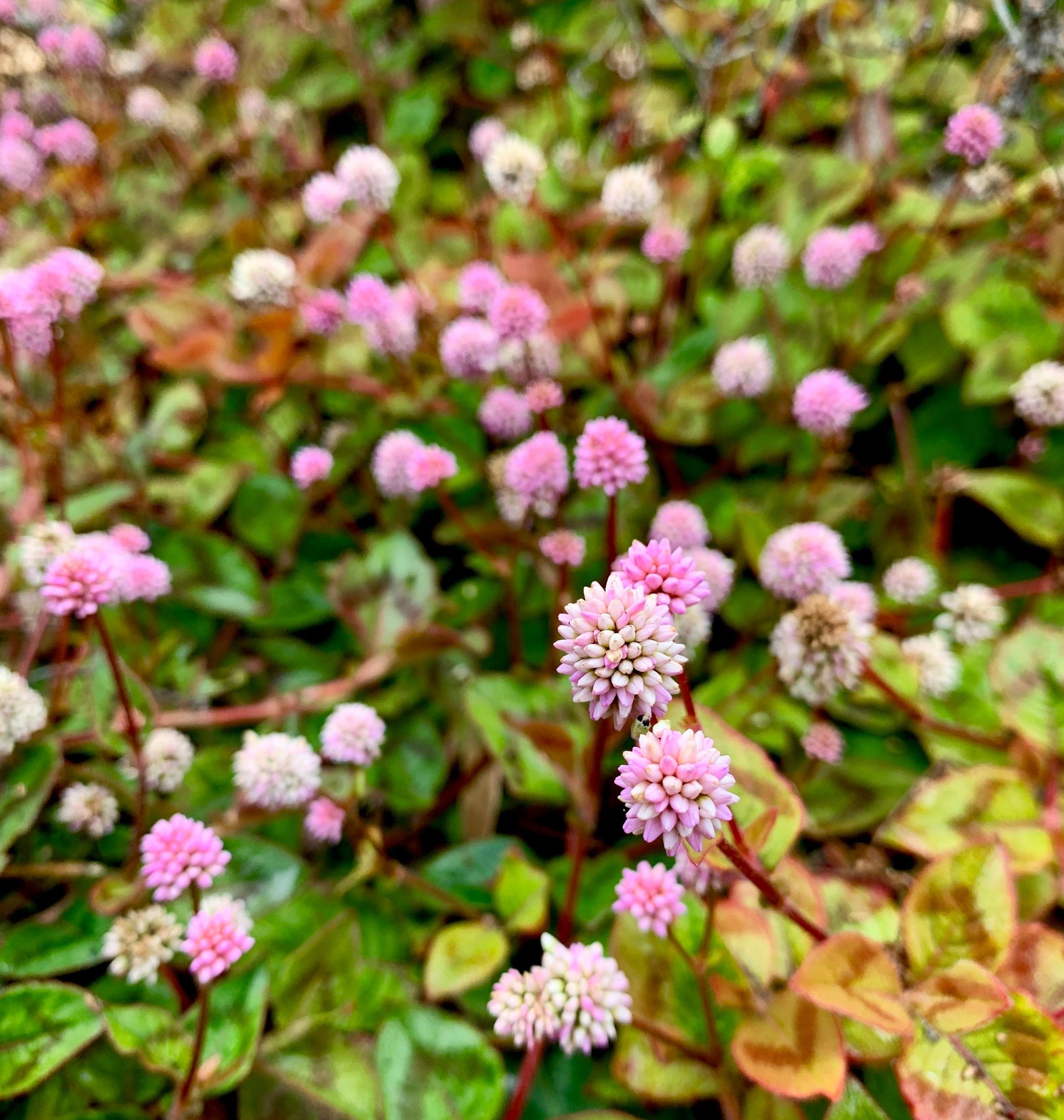 Delicate flowers in the front garden.