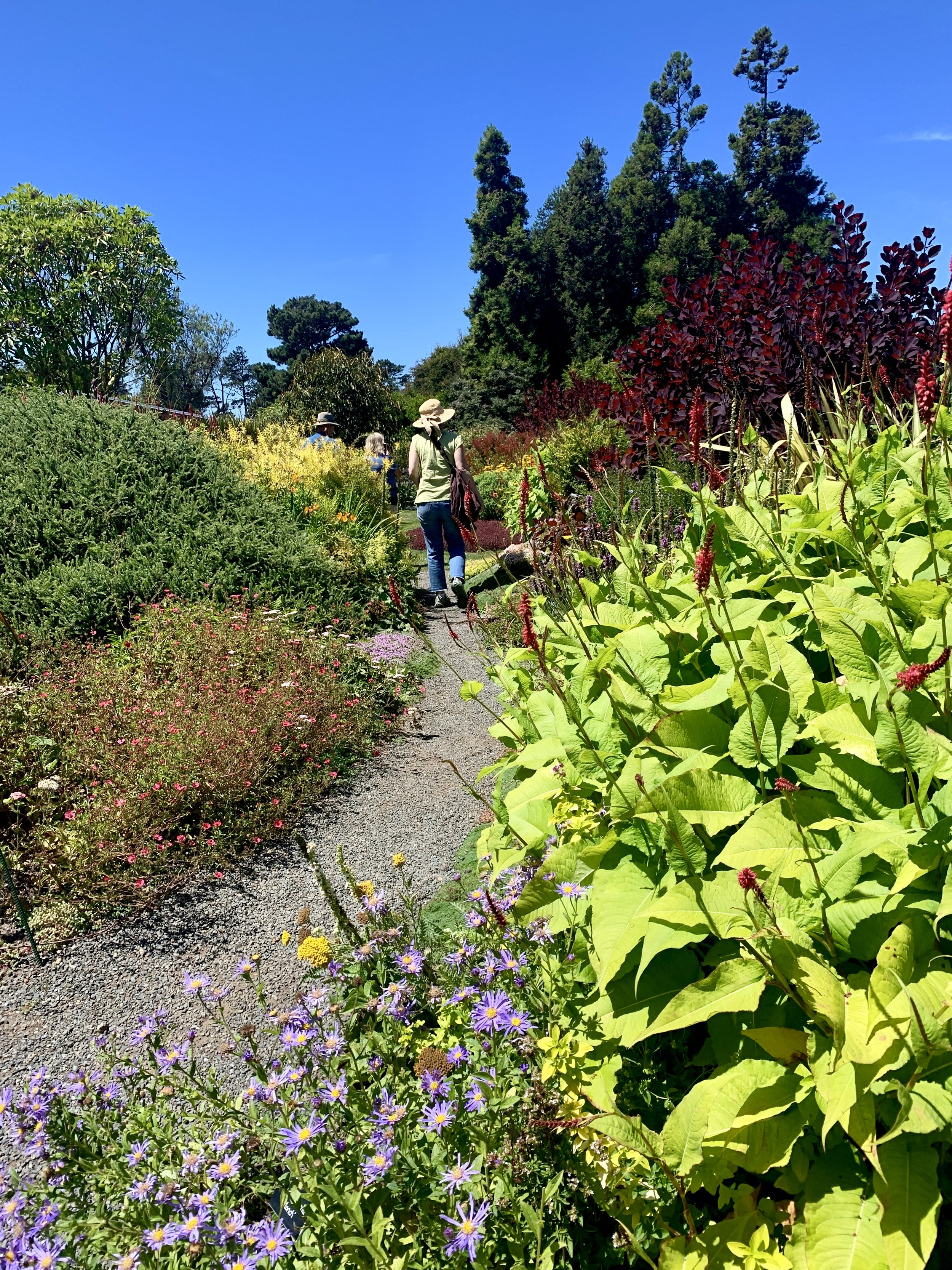 This could be you, wending your way through the perennial garden…
