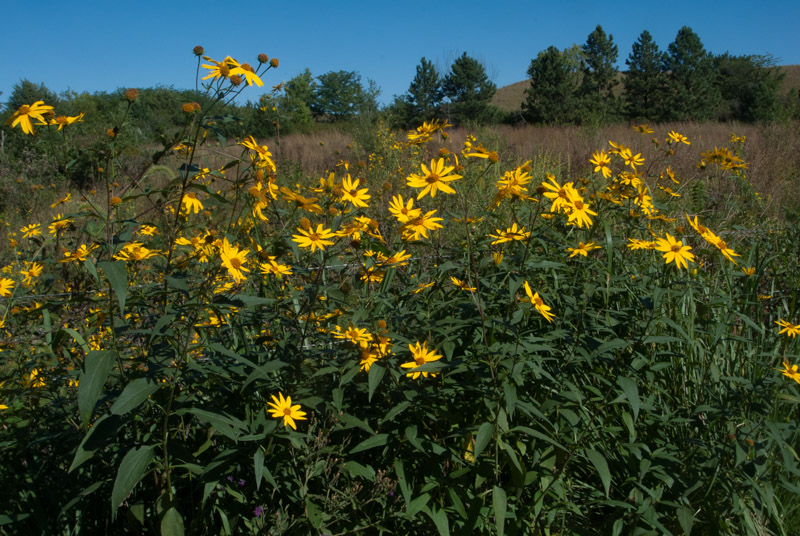 CRP practices include restoration of rare and declining habitats. Photo by Ron Klataske