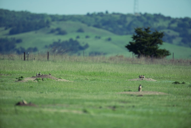 Please Help Conserve Prairie Dogs and Associated Wildlife - Your Support Needed Now