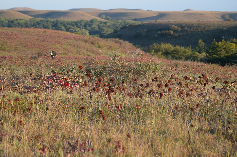 Scenic native prairie/ranchland protected with a conservation easement in the Flint Hills. Photo by Ron Klataske
