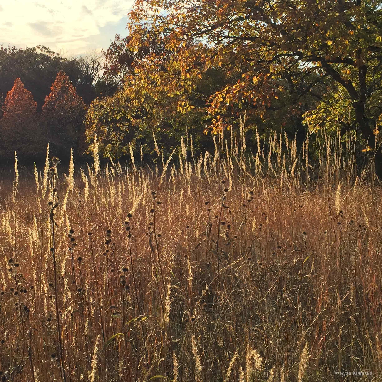 Autumn prairie grass © Ryan Klataske.jpg