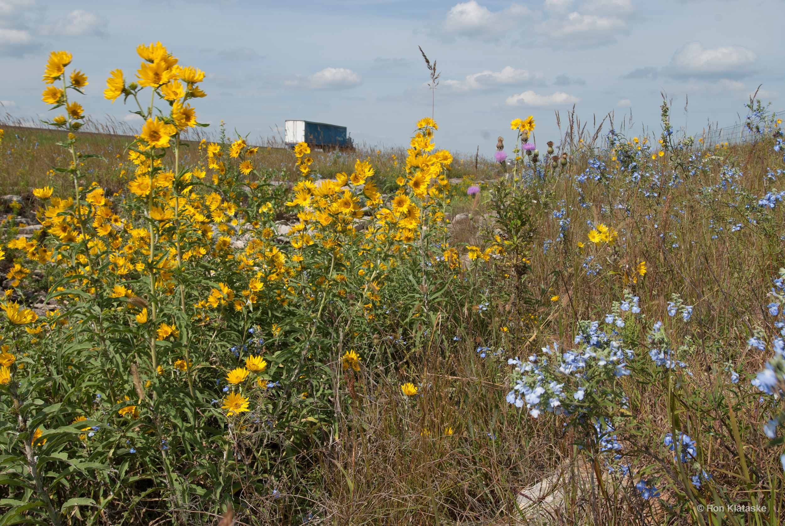 Roadside wildflowers © Ron Klataske.jpg